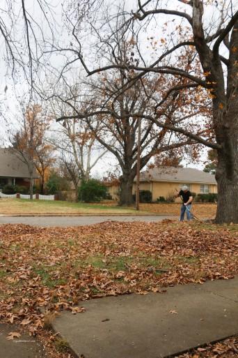 Fall Leaves Raimon